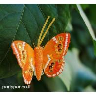 Dekoratyvinis drugelis segtukas, oranžinis