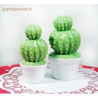 Indas su dangčiu kaktusas, mažas